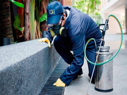 Controle de pragas em condomínios - Inseticidas